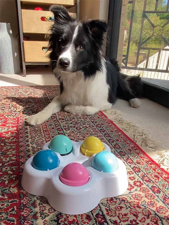 Stimulating Dog Toys